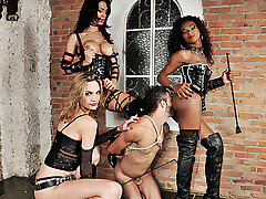 Three spectacular ts dommes are in bdsm action today. Watch the boss bitches Adelaide Novaes, Cybelli Calmon and Jennifer Satine take control of their submissive slave. These three take turns wrecking his mouth and ass in this intense domination scene.